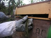 巣箱の隙間を埋めているプロポリス写真