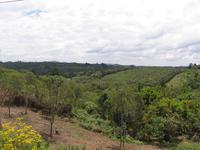 ブラジルのプロポリス農園