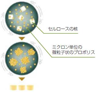 プロポリス粒の製造過程